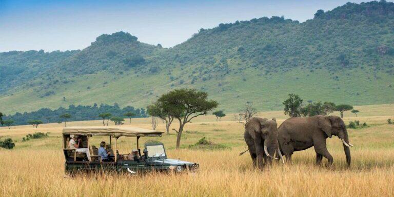 seeing-elephants